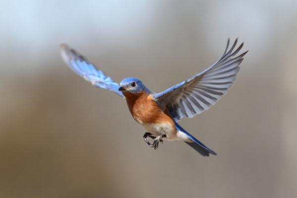 chim bay vào nhà